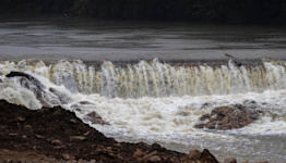 'A tremendous win.' Kentucky dam removal will help an ecological treasure.