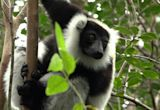 Madagascar's lemurs take a breather as tourism struggles