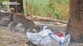 印度染疫屍未及火化 法官淪為野狗食物咬爛臉部 | 大視野