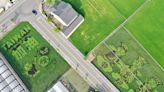 苗栗期間限定「彩繪稻田」!登上360度觀景台眺望超壯觀