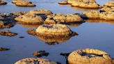 Stromatolites: The Earth's oldest living lifeforms