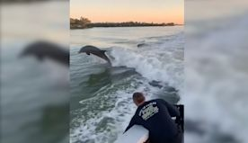 A trio of Dolphins give Florida firefighters a private show on the water