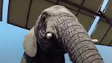 Watch Hungry Elephant Burst Into a Kitchen Like the Kool-Aid Man