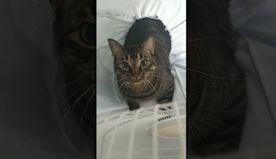 Kitty Guarding His Fort || ViralHog