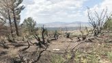 Learn about Mullen Fire impacts and help with data collection