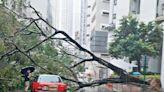 黃雨下香港仔塌樹壓毀兩的士