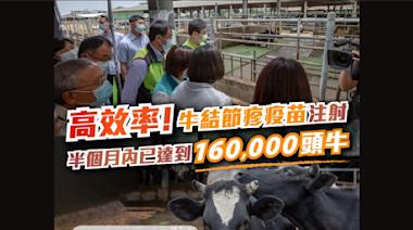 半個月完成16萬牛隻疫苗注射 總統讚牛結節疹防疫高效率