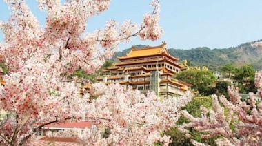 台南「花旗木景點攻略」!老糖廠旁粉色步道 上百棵花海盛開超夢幻