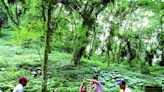 漫步太平山 靜享森林之美