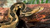A slithering resident is back. Here's how to keep yourself, pets safe from snakes this summer