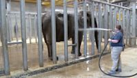 Milwaukee County Zoo Elephant Gets Squeaky Clean at Bath Time