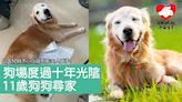 被遺棄狗場10年 狗狗尋家盼晚年嘗家庭溫暖 - 香港動物報 Hong Kong Animal Post