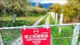 《台中》福壽山農場蘋果熟了 遊客別偷摘