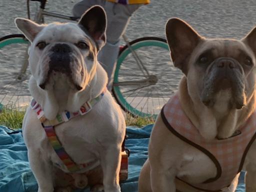 信報即時新聞 -- Lady Gaga被搶兩愛犬已尋回