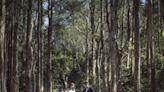 香港影Pre Wedding婚紗相也很靚!5大本地美景婚照拍攝地點