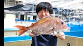 增肉1.2倍的基因編輯鯛魚 在募資網站開賣 - Cool3c