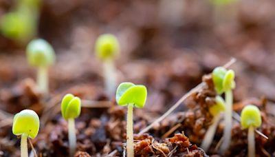 【創業奇情】之「種子法則」 - ezone.hk - IT Times - 名家專欄