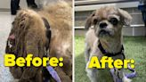 This Abandoned Shih Tzu Went Viral After Being Rescued By A Shelter, And His Transformation Will Warm Your Heart
