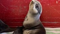 A baby seal was rescued from a California parking deck and immediately took a much-needed nap