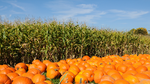 The Best Corn Mazes and Pumpkin Patches in America