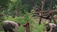 Berlin Zoo's twin pandas celebrate first birthday