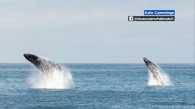 Photos show humpback whales breaching, possibly reacting to 4.7 magnitude earthquake near Hollister