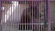 Two bears in Lebanon rescued from harsh zoo