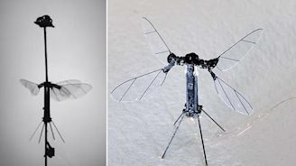 Incredible video reveals the tiny solar-powered 'RoboBEE'