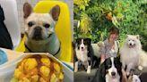 帶著毛小孩出門吃喝玩樂!精選8間寵物友善餐廳 | 美食旅遊 | 生活 | NOWnews今日新聞