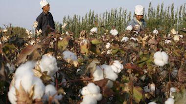 迫於國際壓力 三中國供應商停用新疆勞工