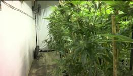 Billings to decide boundaries for recreational marijuana dispensaries