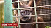 貧富差距「驅動國際野生動物交易」