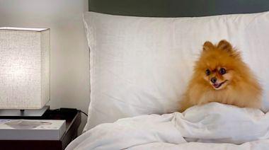【香港Staycation】月租罕有寵物歡迎服務式住宅 香港莎瑪炮台山服務式公寓