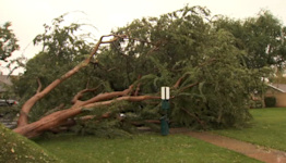 CA storm: Strong winds topple over trees, power lines