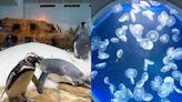 桃園Xpark遭批「水母斷肢、企鵝受傷」!官方回應:不實指控將採法律途徑 - 玩咖Playing - 自由電子報