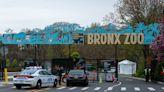 NYC mayoral candidate Curtis Sliwa wants to close Bronx Zoo over animal welfare concerns