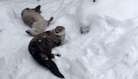 Playful Animals Enjoy Snow Day at Buffalo Zoo