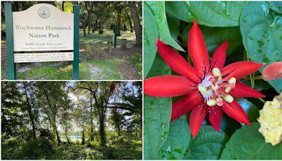 Blackwater Hammock Nature Park is a hidden gem in Tampa