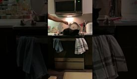 Poke the Cat to Turn on Oven Light || ViralHog