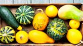 14 Types of Squash: Your Guide to Winter and Summer Squashes
