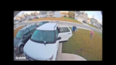 'A bobcat attacked my wife!' Security camera captures wild encounter in North Carolina