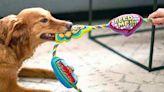 The 13 Best Pet Subscription Boxes to Spoil Your Pet