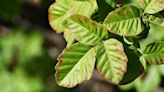 Here's What a Poison Oak Rash Looks and Feels Like, According to Dermatologists