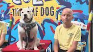 Super Dog Cole Helping Students Overcome So Much