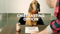 Busch Beer Wants to Pay a Dog $20,000 — Plus Benefits — to Taste Test Their Dog Brew