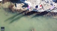 New Zealand Family Discover Sharks Swimming in Shallow Rock Pool