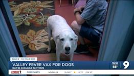 UArizona develops Valley Fever vaccine for dogs