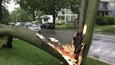 Tips to avoid tree damage during summer tornadoes, storms