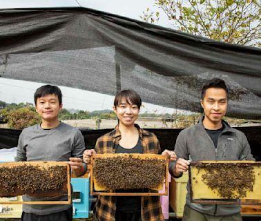 在香港找一個角落,當起養蜂人|端傳媒 Initium Media