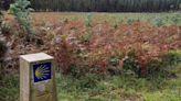 Denuncian que las normativas de la Xunta favorecen aún más la proliferación de eucaliptales